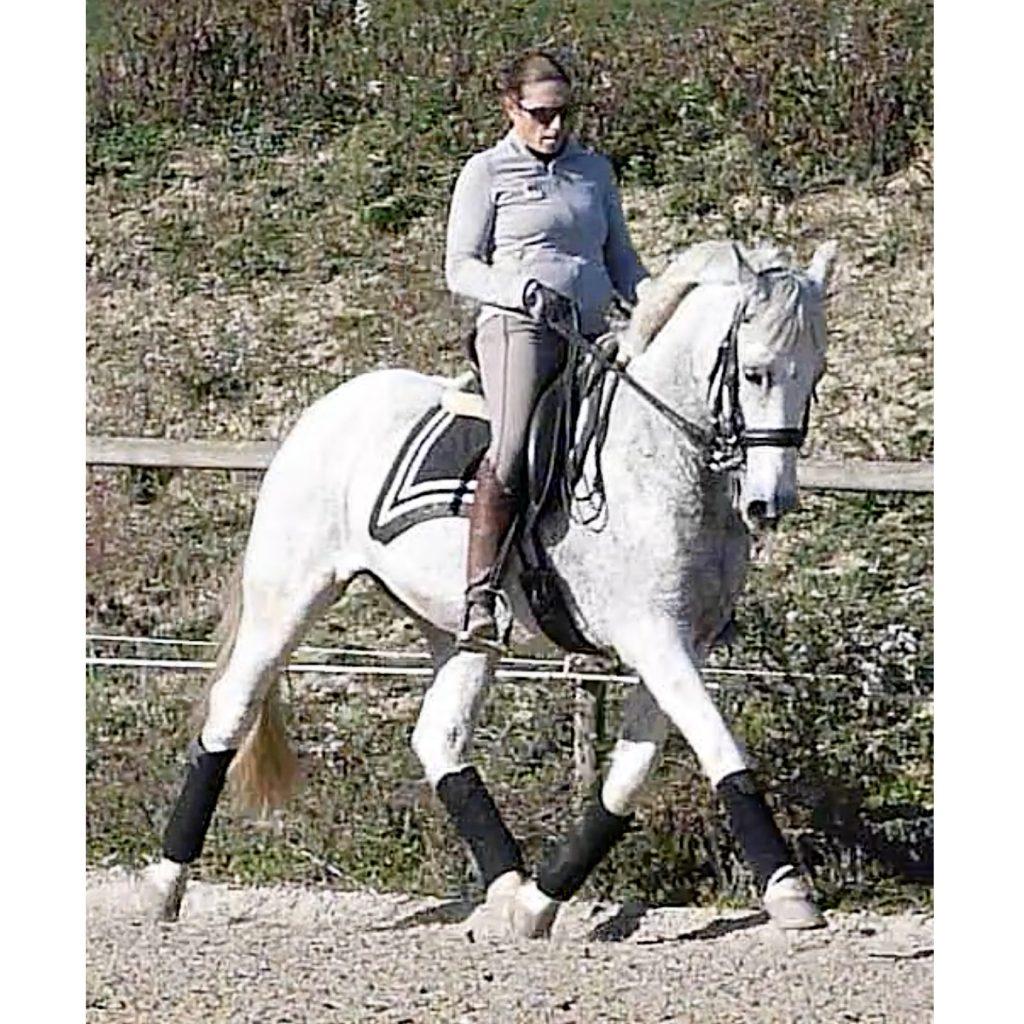 a v dressage para jinestes y caballos
